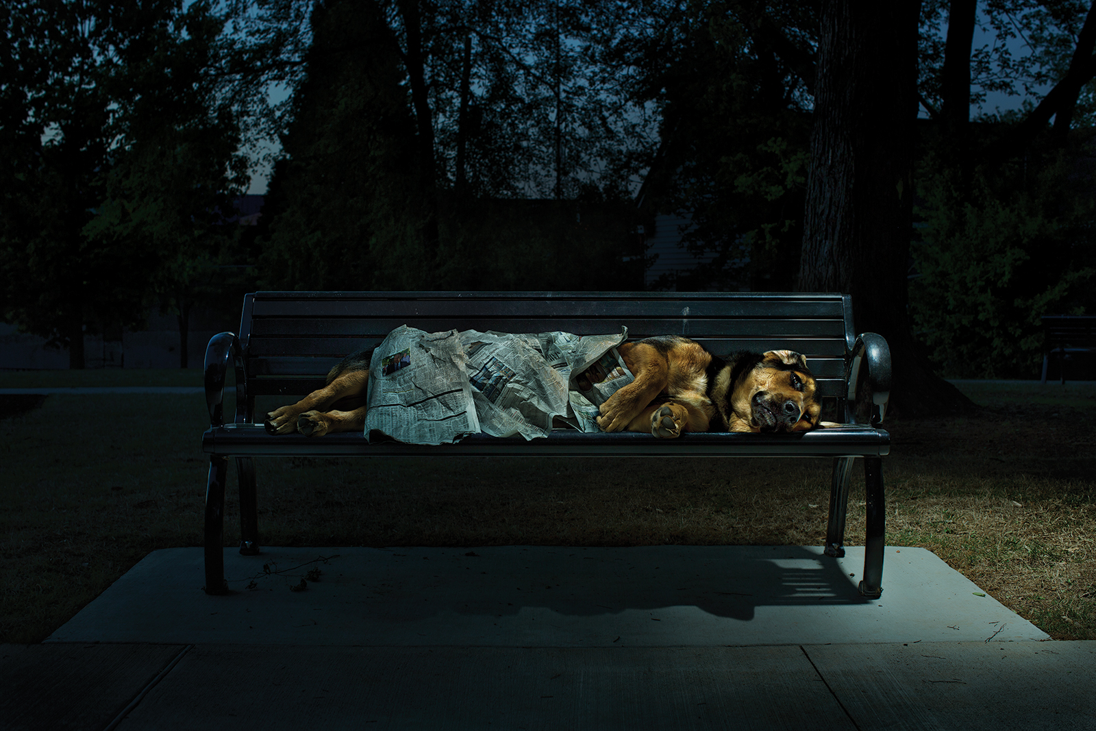 Homeless-Dog-Bench-low-res